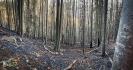 Waldbrand Molln_6